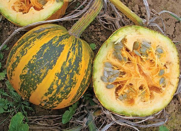 Описание сорта тыквы голосемянной, его характеристика и выращивание