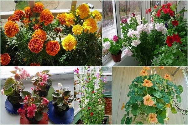 Особенности выращивания растений в домашних условиях зимой: как сохранить петунию до следующего лета?