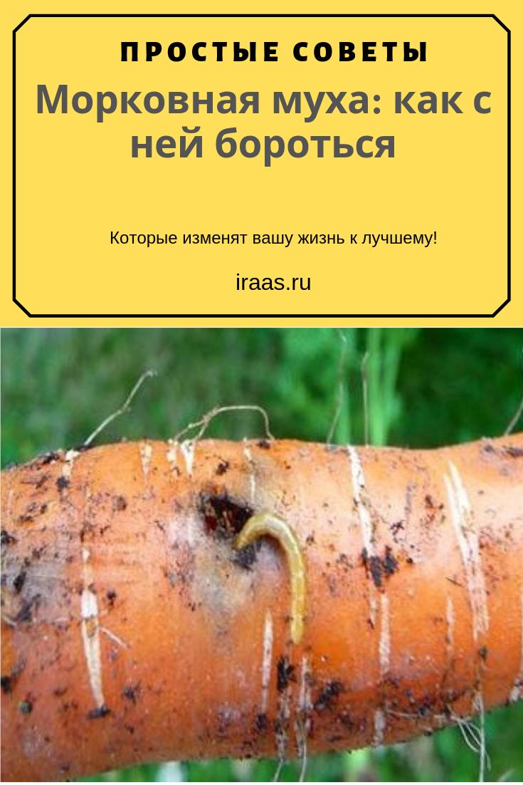 Как бороться с морковной мухой народными средствами