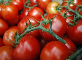 Суперранний сорт томатов джина