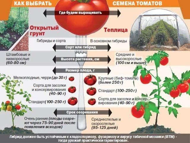Когда можно пересаживать рассаду помидоров в грунт по лунному календарю на апрель 2020 года