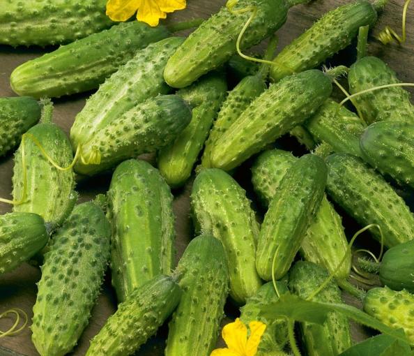 Огурец «веселые гномики f1»: рекомендации по выращиванию и уходу