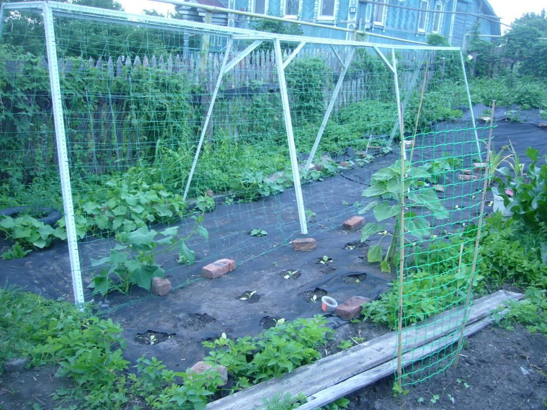 Выращивание огурцов под пленкой – популярная агротехника