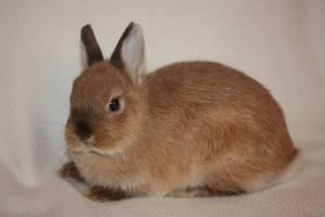 Содержание и уход за декоративным кроликом в домашних условиях для начинающих