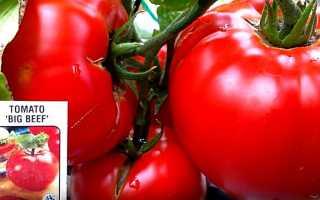 Томаты биф: лучшие сорта и правила выращивания