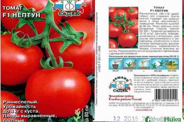 Описание сорта томата пелагея и его характеристики