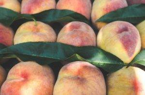 Как лучше хранить персики в домашних условиях, принципы и правила