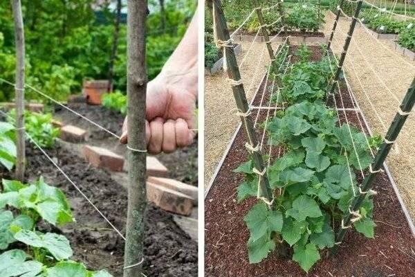 Как правильно подвязать огурцы в открытом грунте и теплице из поликарбоната