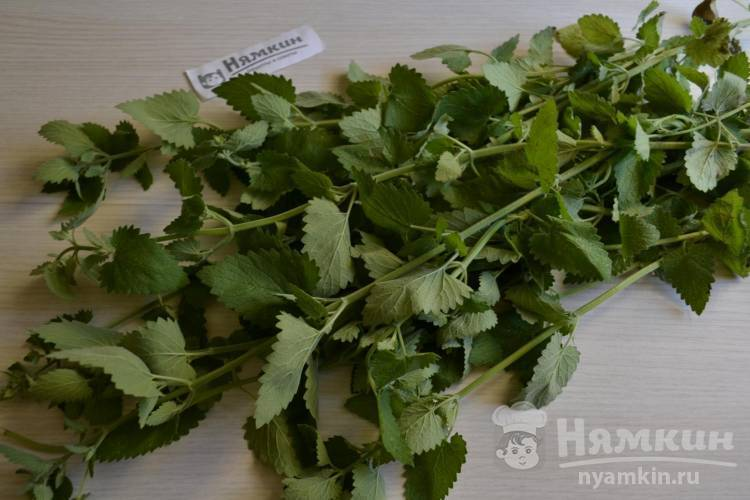 Сочетание известных растений – мелиссы и мяты. когда сушить и как их заготавливать на зиму, а также другие советы