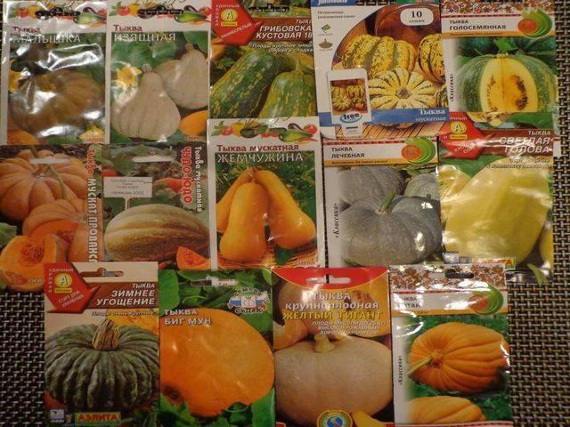 Особенности выращивания голосемянной тыквы с пошаговыми инструкциями