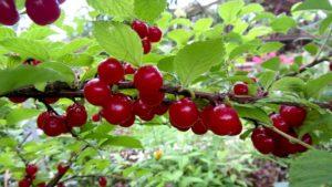 Благоприятные дни для сбора урожая в 2020 году: когда собирать, календарь