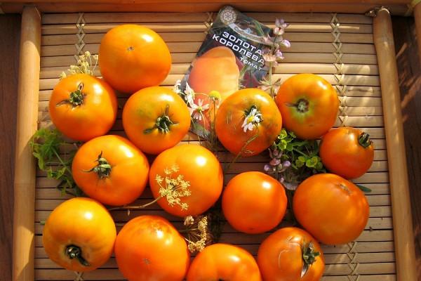 Чемпион по содержанию бета-каротина: томат «клондайк», рекомендованный для диетического питания