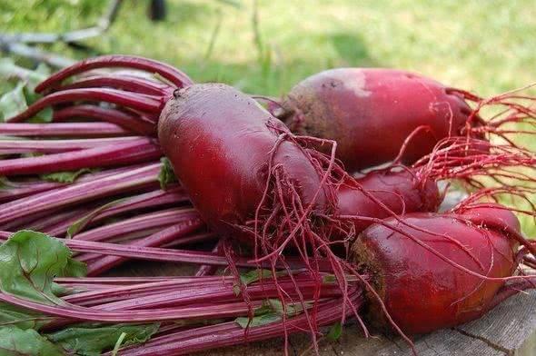 Выращивание свеклы на урале — лучшие сорта для посадки, их описание и фото