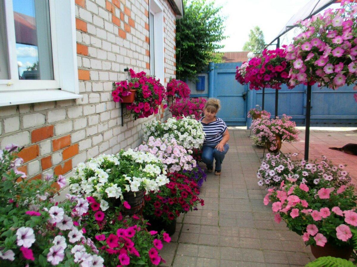 Как сохранить зимой петунию для черенкования. как сохранить петунии зимой - садовое обозрение