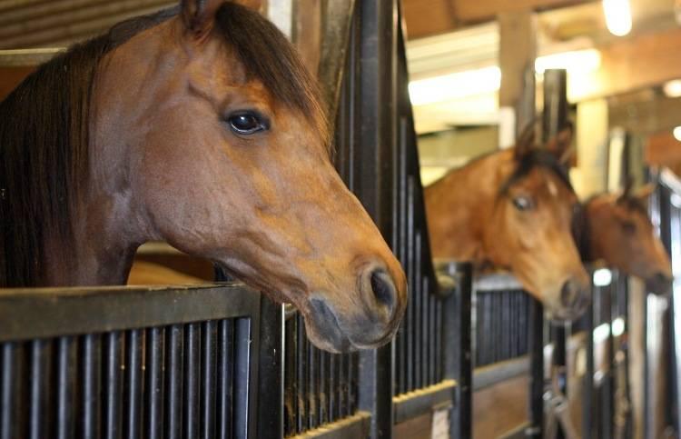 Как и для чего разводят лошадей, как сделать на этом бизнес