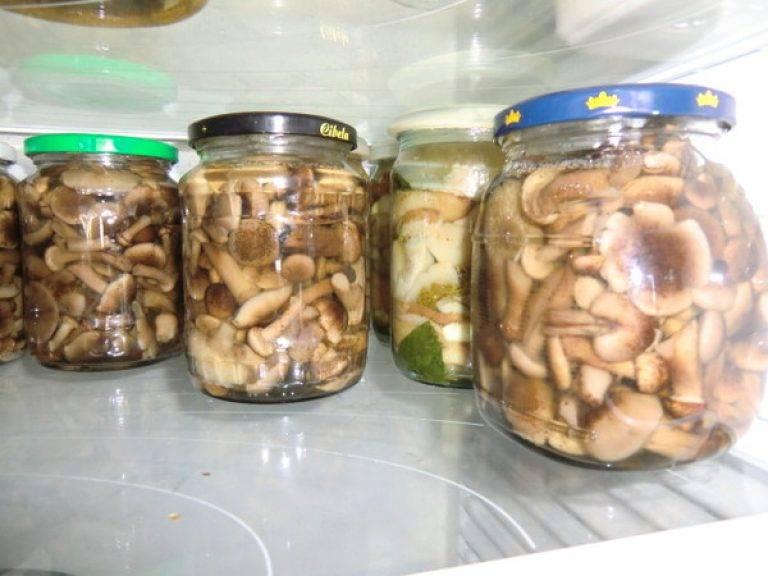 Сроки и условия хранения свежих грибов