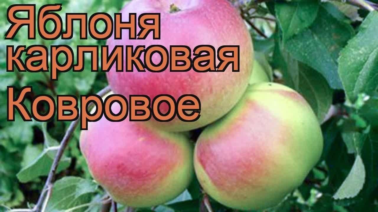 Яблоня осенняя радость: описание сорта и характеристики, история селекции с фото