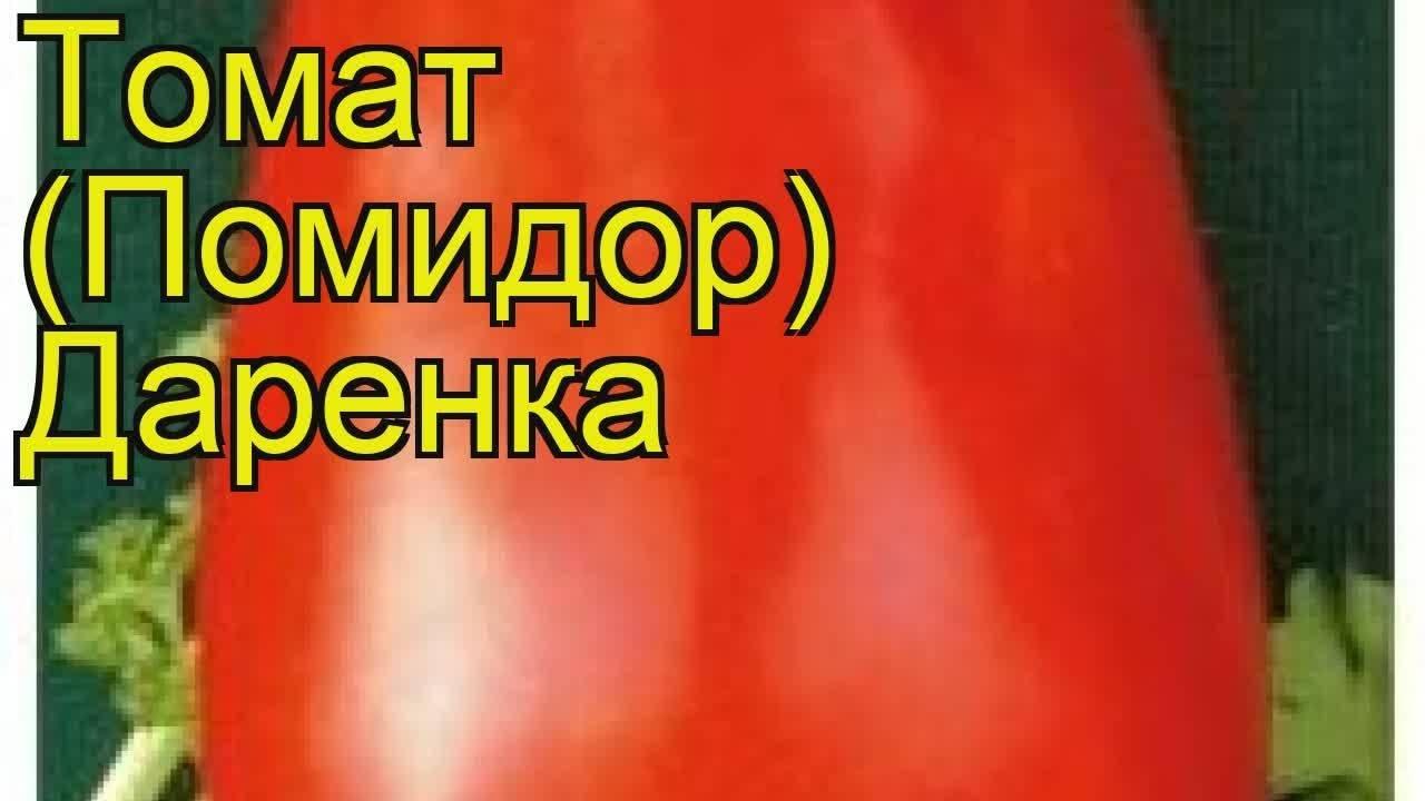 Томат «дамский угодник». описание сорта — характеристика урожайности и агротехника посадки, выращивания помидора и ухода за ним (фото)