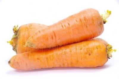 Описание вредителей моркови, лечение и борьба с ними