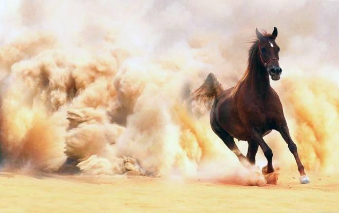 Какую скорость развивает лошадь: максимальные показатели км в час