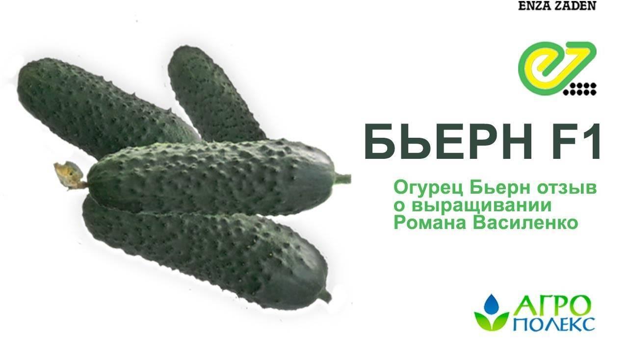 Описание сорта огурцов бьерн f1, выращивание и борьба с вредителями