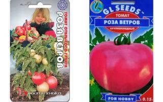 Томат «роза ветров»: характеристика, описание сорта, советы по выращиванию отличного урожая помидор, фото-материалы
