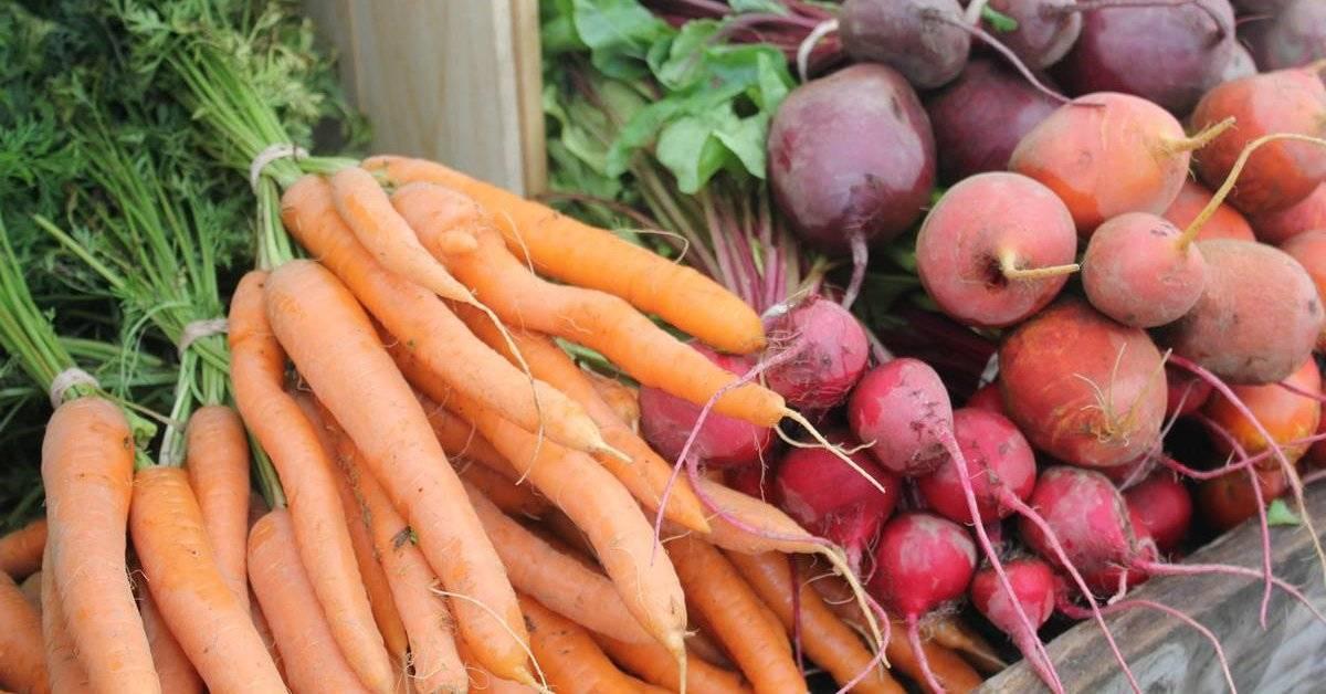 Почему на грядке вянет морковь?