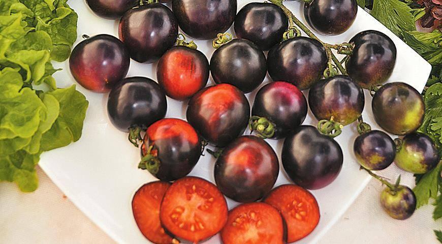 Сорт томат сибирский скороспелый: описание, уход, характеристика