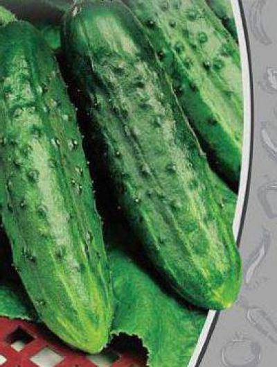 Характеристика и описание дальневосточного огурца, его выращивание