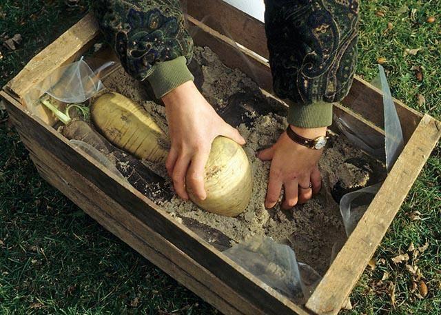 Чем обработать погреб перед закладкой овощей на хранение