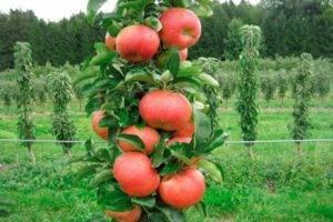 Яблоня юнга (белоснежка): описание и характеристики сорта, подвиды с фото