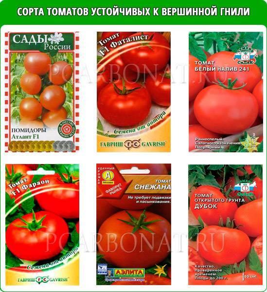 Лечение вершинной гнили томатов в теплице и открытом грунте