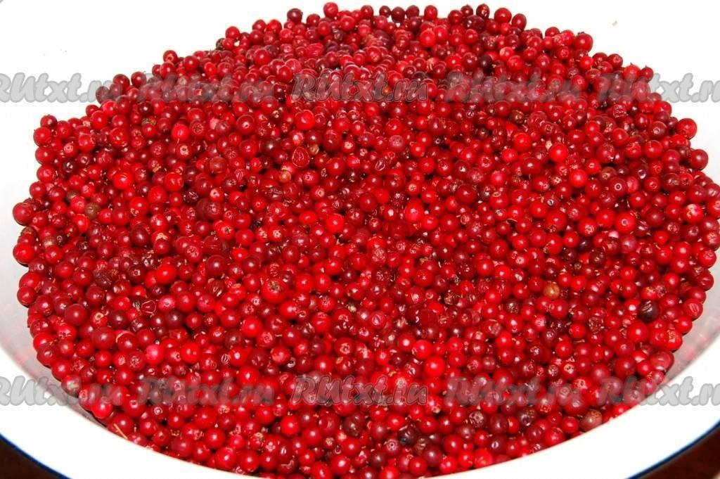 Варенье из брусники: рецепт «пятиминутка» пошаговый на зиму с картинками
