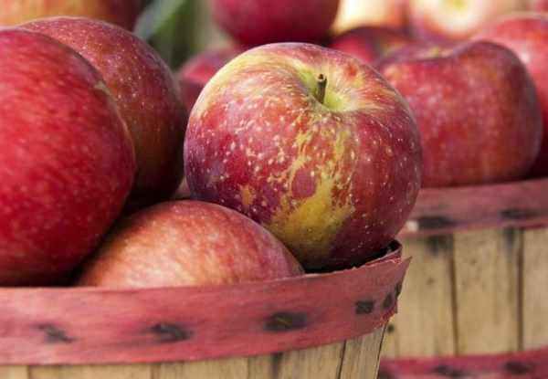 Сохранение яблок в домашних условиях