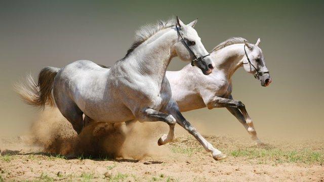 Влияние аллюров на скорость лошади