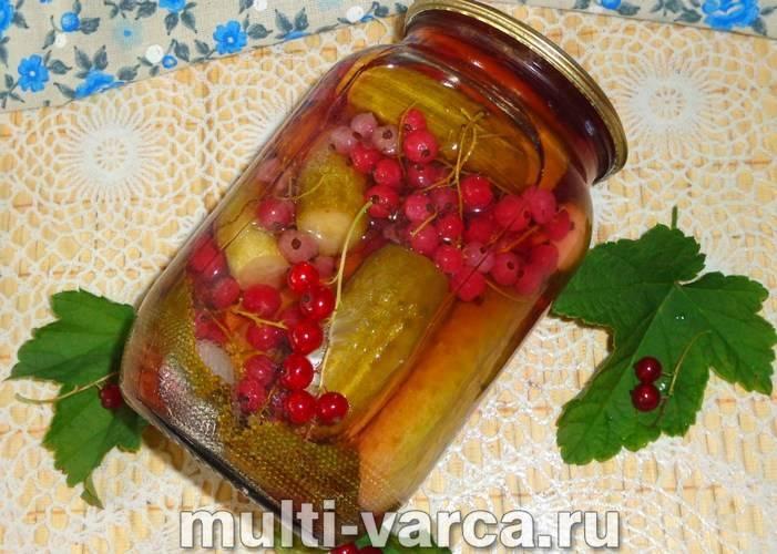 17 лучших рецептов приготовления красной смородины на зиму