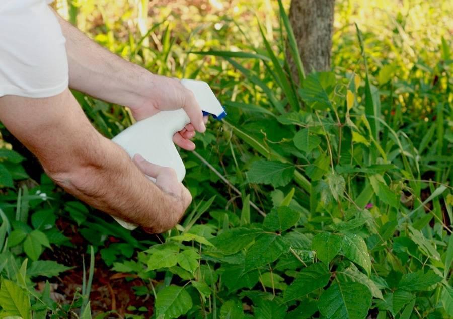 Избавление огорода и дачи от сорняков навсегда