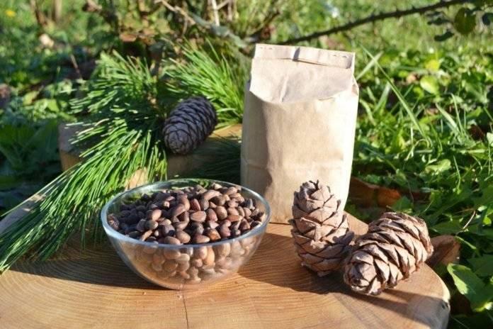 Вкусные и полезные кедровые орехи. когда и как их добывают и каким образом заготавливают?