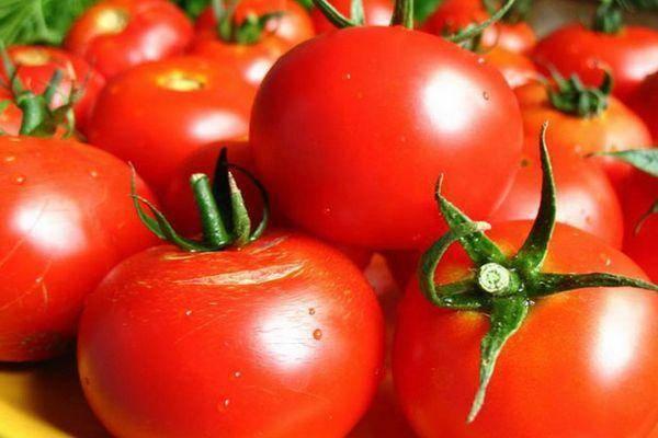 Томат звезда востока: характеристика и описание сорта, урожайность с фото