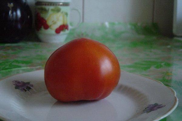 Описание высокоурожайного томата сорта бизнес леди