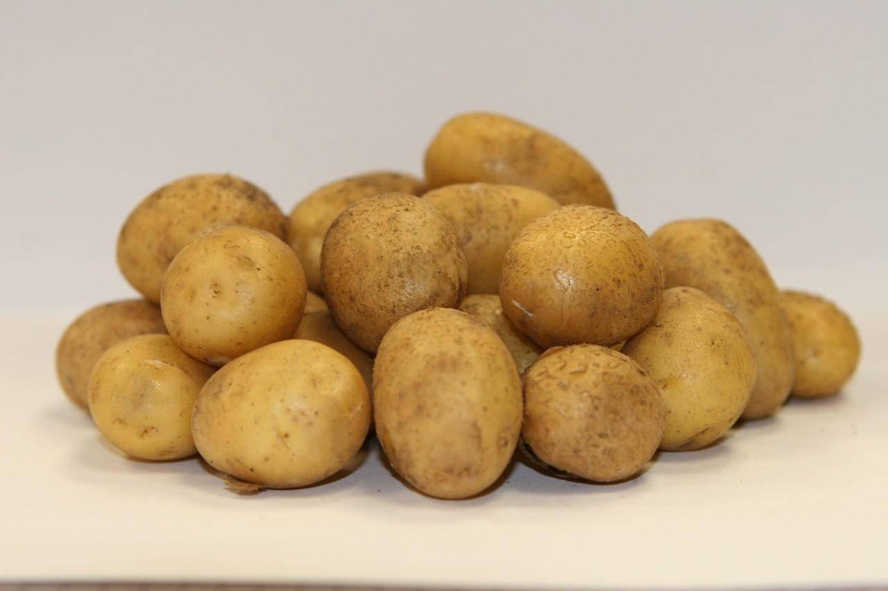 рады предложить сорт картофеля хозяюшка фото и описание отзывы профессиональным