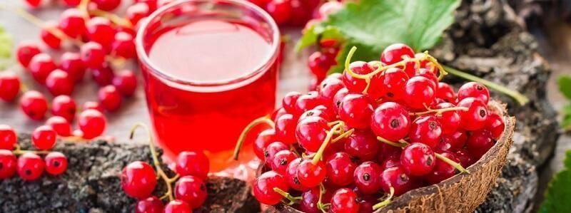 Красная смородина— рецепты заготовок на зиму и вкусные десерты
