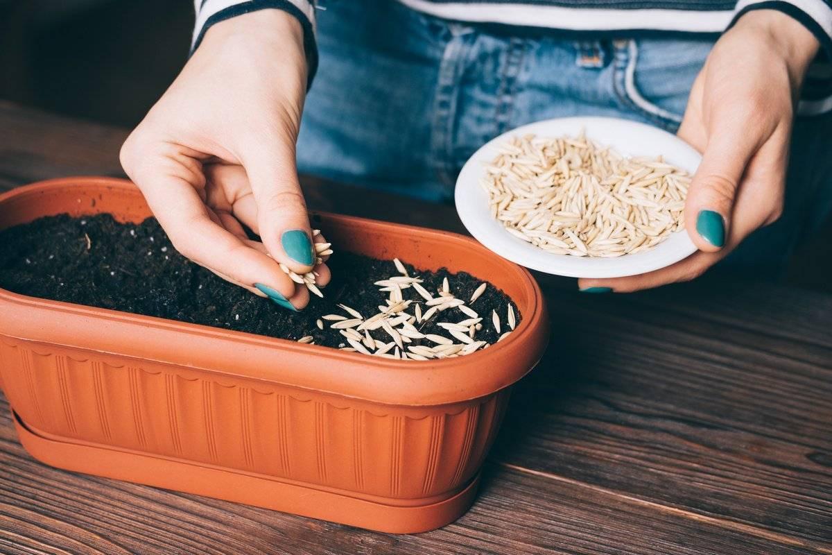 Как узнать уровень всхожести семян?