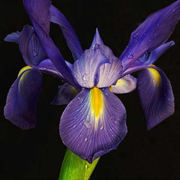 Какие многолетние цветы сажают осенью в сибири. самые неприхотливые многолетние цветы для сибири