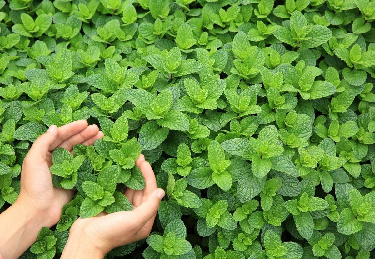 Что посадить на огороде: когда и как сажать, список овощей и ягод
