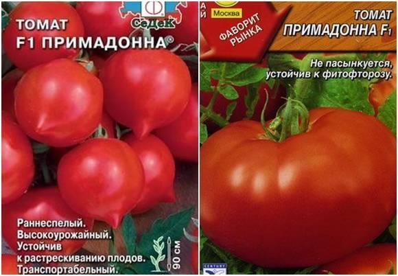 Сорт томатов дрова