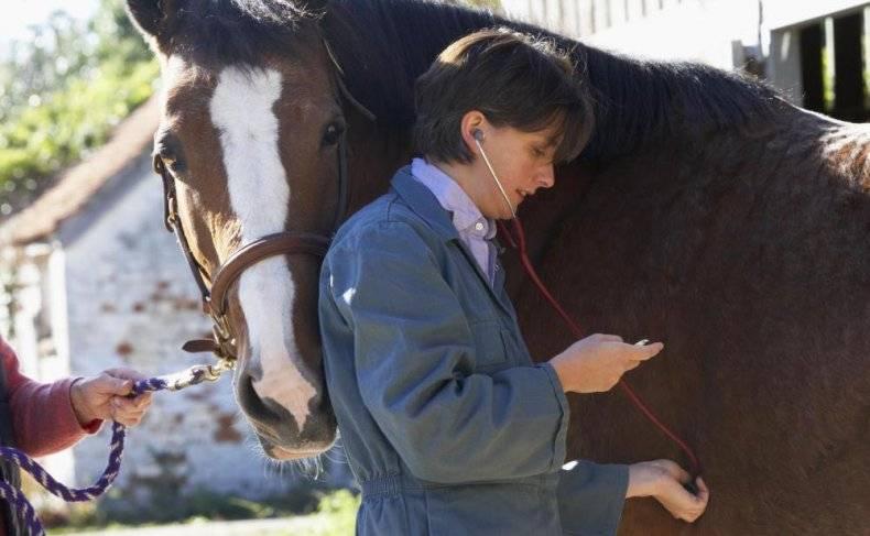 Случная болезнь лошадей: как диагностировать и правильно лечить?