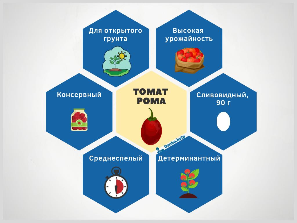 Томат рома: описание сорта, фото, отзывы