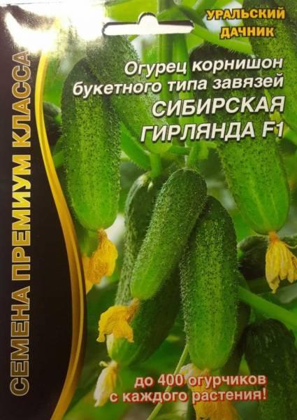 Огурцы сибирская гирлянда f1 – лёгкий урожай в холодную погоду