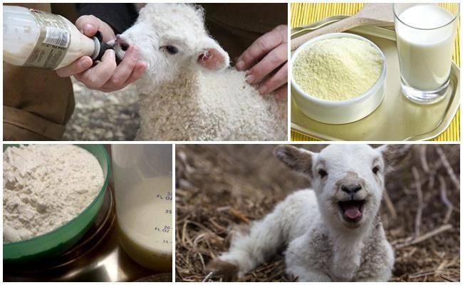 Как правильно разводить сухое молоко для ягнят, пропорции и производители